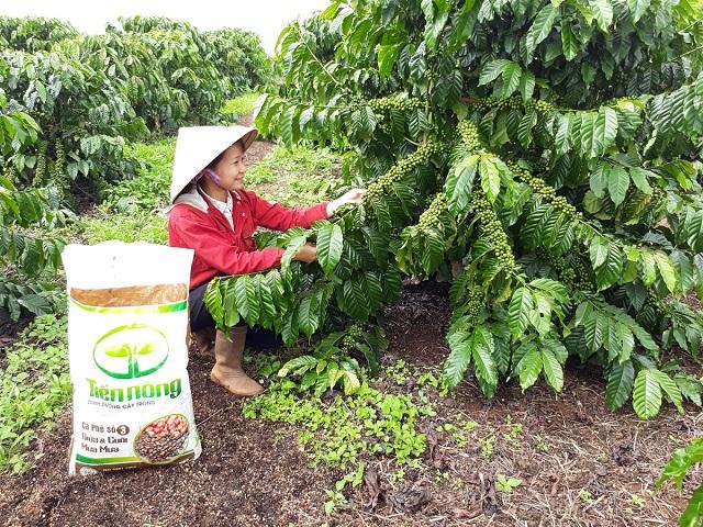 Hướng dẫn quy trình trồng và bón phân cho cà phê
