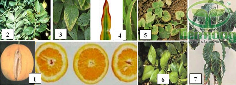 Biểu hiện thiếu kali: 1- trên quả; 2- trên lá cây khoai tây; 3- trên lá cây đậu tương; 4- trên lá cây ngô, lá cây lúa; 5- trên lá cây bầu bí; 6- trên lá cây có múi; 7- trên cây cà phê