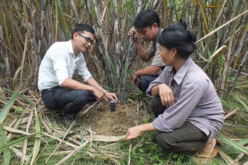 giải pháp bón phân cho cây mía