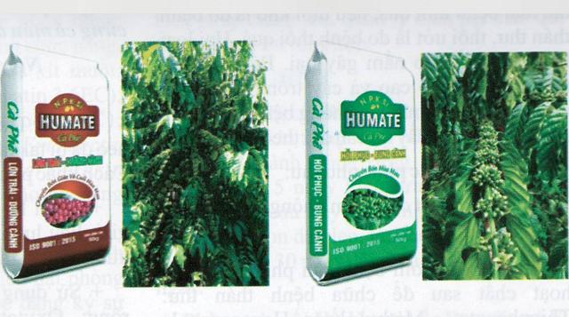 Hướng dẫn sử dụng phân bón Tiến Nông cho cây cà phê trên báo Khuyến nông Lâm Đồng